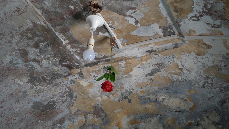 A red rose and a light bulb hanging from a ceiling with layers of peeling paint.