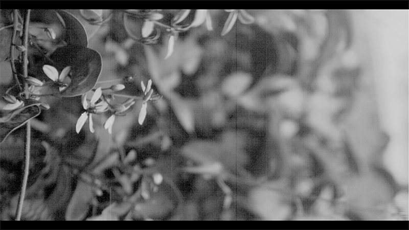 A black and white image of pale flowers and vegetation, textured like a photocopy