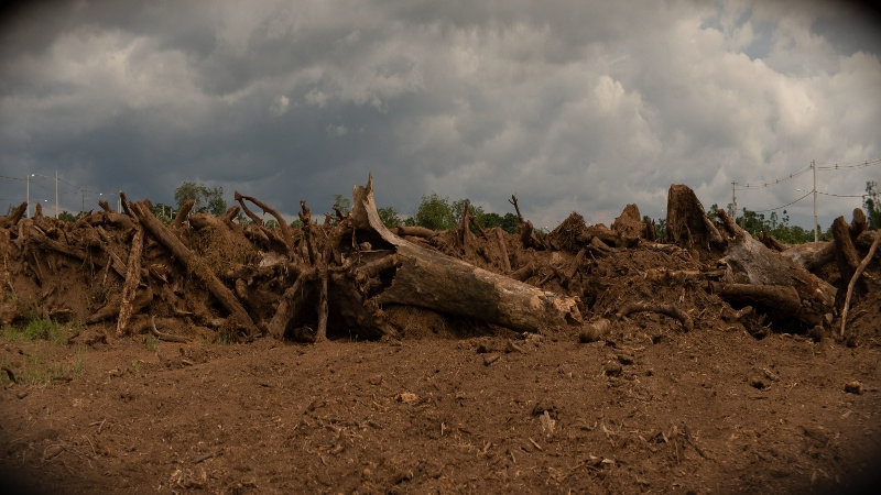 Image shows a cloudy sky with tree roots and soil in the foreground.